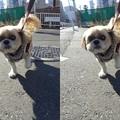 Photos: 1月の散歩3