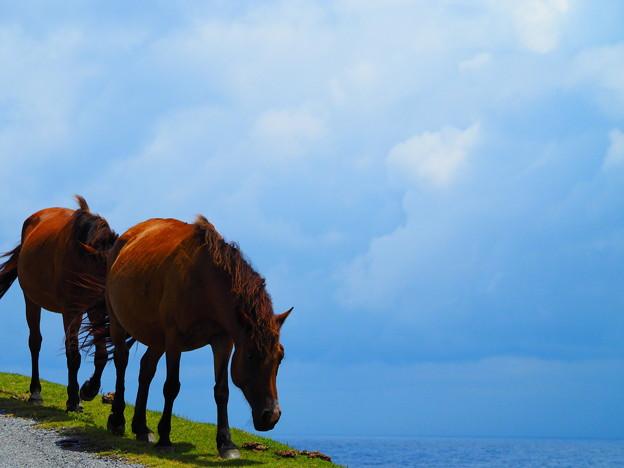 写真: 馬と海原