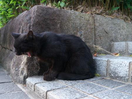 P1080628 一昨日の野良猫その1