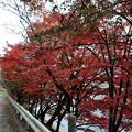 Photos: DSC_3041 中山七里の紅葉その1