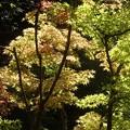 名古屋 徳川庭園♪