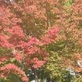 徳川庭園の紅葉
