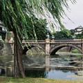 写真: 皇居二重橋前~其の壱~『柳に風』