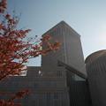 Photos: 秋に見上げる