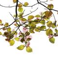 Photos: 若葉の季節