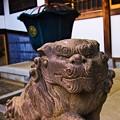 Photos: 静勝寺 狛犬左