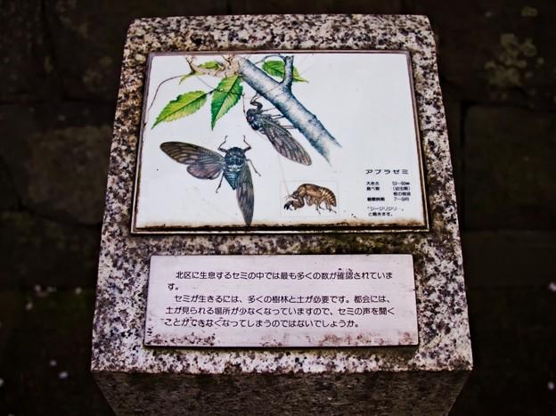 Photos: 赤羽西口 北区にいる虫