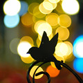 WONDER FLOWER GARDEN