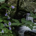Photos: 花の名教えてください