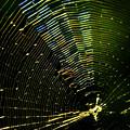 「光彩」蜘蛛の糸
