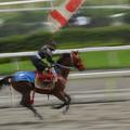 Photos: 甲冑競馬