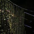 Photos: 光彩「蜘蛛の糸」