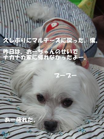 CIMG7693111