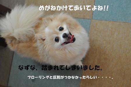 DSC_024812