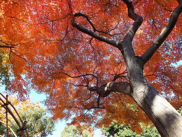 殿ヶ谷戸庭園60