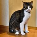 Photos: お澄ましショコラちゃん