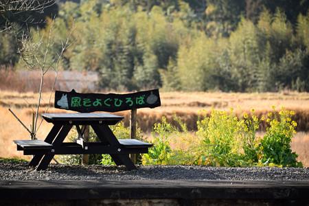 菜の花のベンチ