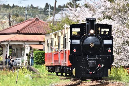桜と里山トロッコ