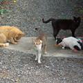 写真: ムー君と御屋敷猫