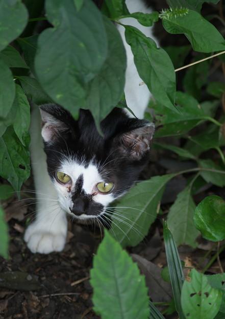 臆病な仔猫