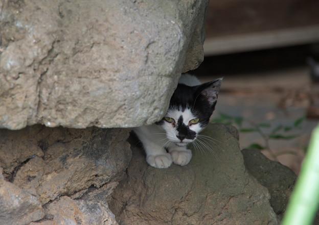 石灯籠に登る仔猫ちゃん