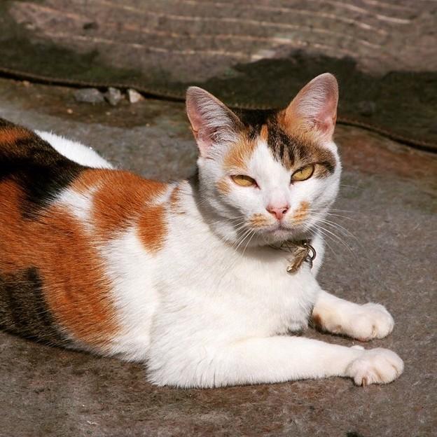 忘れてはならない美人火星猫