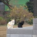 写真: ピーちゃんと黒い子