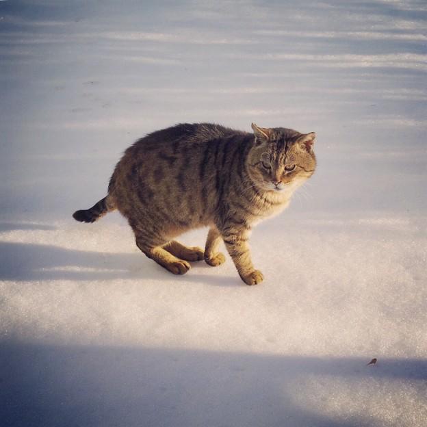 写真: 雪はイヤだニャ(-_-)