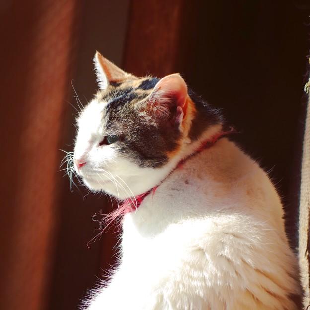 写真: 日向ぼっこ