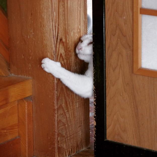 写真: 戸も開けるでち・・・