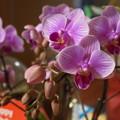 写真: 今年のお花