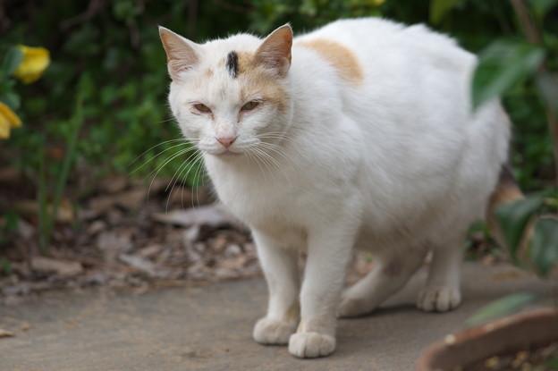 お屋敷近所の火星猫さん