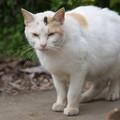 Photos: お屋敷近所の火星猫さん