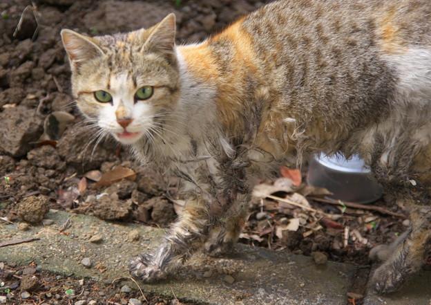 あれあれ、泥だらけな火星猫ちゃん