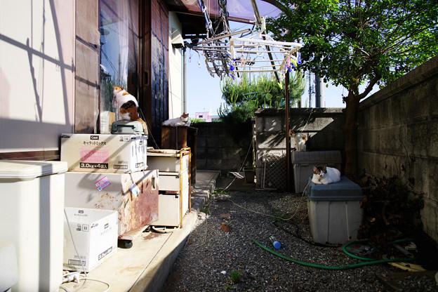 Photos: kontenten家裏庭事情1