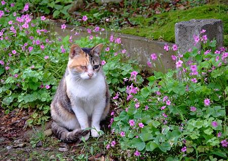 花咲く路地のシゲ子さん