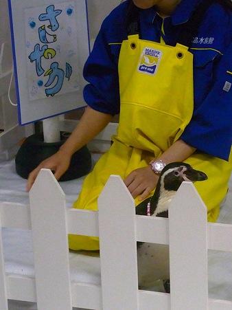 20120506 宮島 ふれあいタイム02