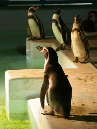 20140823 野毛山 夜のペンギンプール06