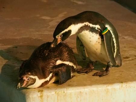 20140823 野毛山 夜のペンギンプール13