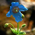 Photos: 青い夢