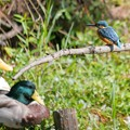 Photos: 野鳥の会