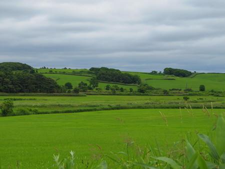 どこまでも緑の丘…