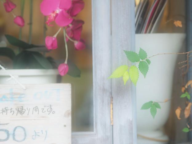 Photos: ある窓辺