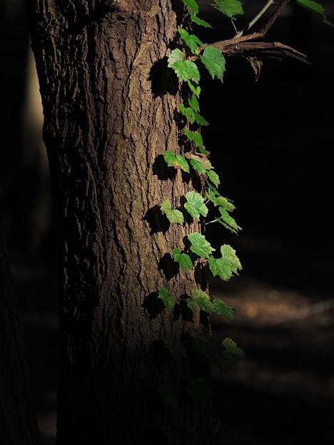 Photos: 木漏れ陽の記憶