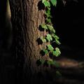 木漏れ陽の記憶