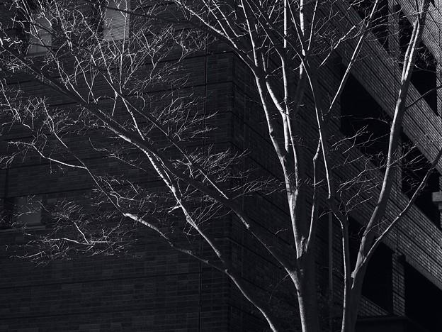 Photos: 冬枯れの街