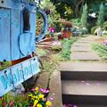 Photos: Welcome to my garden