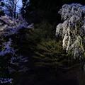 写真: 照る樹