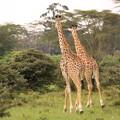 Photos: 1564 ナバイシャ@ケニア
