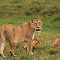 Photos: 1566 マサイマラ@ケニア